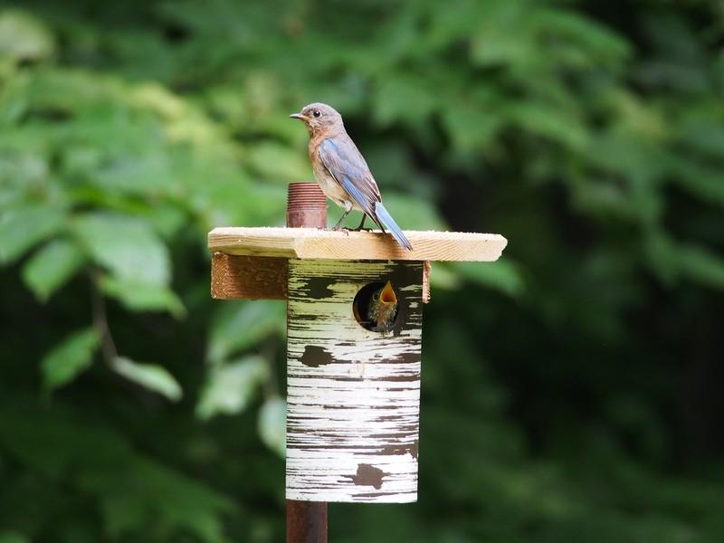 pvc nest box